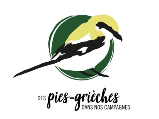 LPO Auvergne – Illustration Pies-Grièches